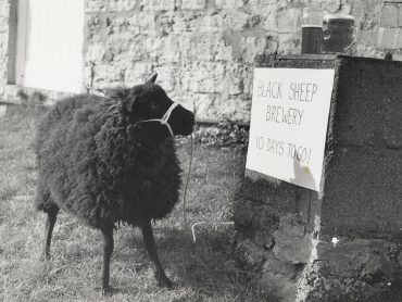The Black Sheep Story